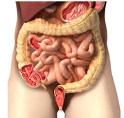 avoid toxic bowel toxic body